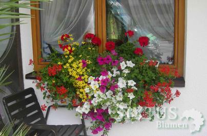 balkonkisten beispiele balkon und garten sixtus. Black Bedroom Furniture Sets. Home Design Ideas
